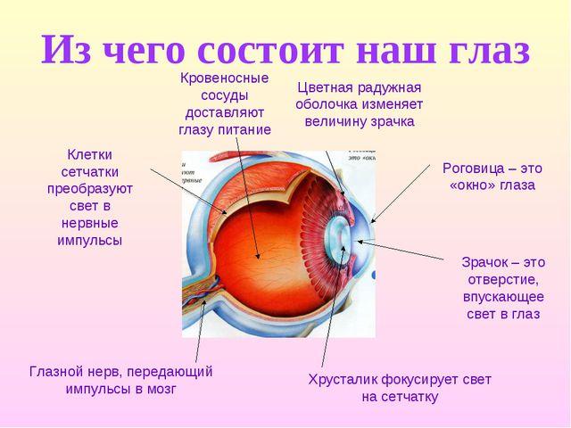 Из чего состоит наш глаз Глазной нерв, передающий импульсы в мозг Хрусталик ф...