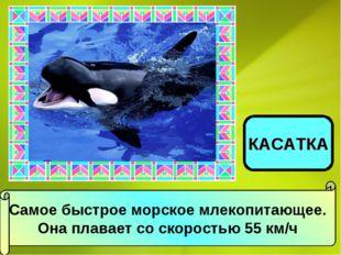 Самое быстрое морское млекопитающее. Она плавает со скоростью 55 км/ч КАСАТКА