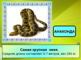 Самая крупная змея. Средняя длина составляет 5-7 метров, вес 250 кг. АНАКОНДА