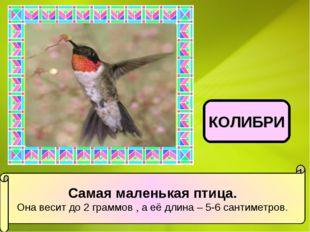 Самая маленькая птица. Она весит до 2 граммов , а её длина – 5-6 сантиметров.