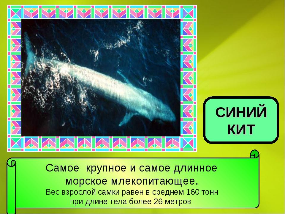Самое крупное и самое длинное морское млекопитающее. Вес взрослой самки равен...