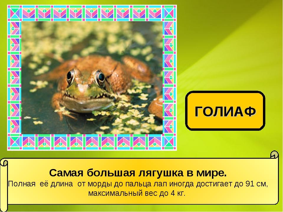 Самая большая лягушка в мире. Полная её длина от морды до пальца лап иногда д...