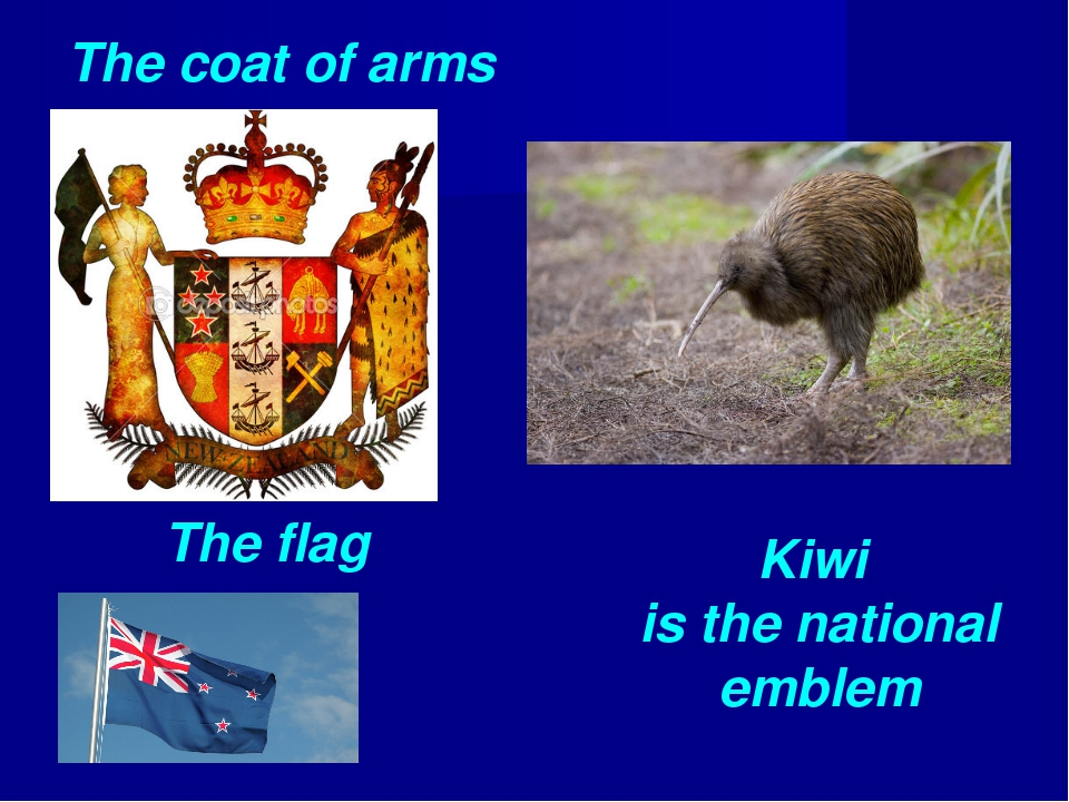 The coat of arms The flag Kiwi is the national emblem
