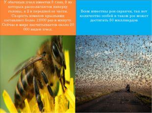 У обычных пчел имеется 5 глаз, 3 из которых располагаются наверху головы, а