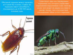 Обычный таракан может прожить до 9 дней без головы. Самка же таракана имеет