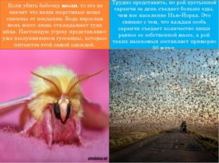 Если убить бабочкумоли, то это не значит что ваши шерстяные вещи спасены о