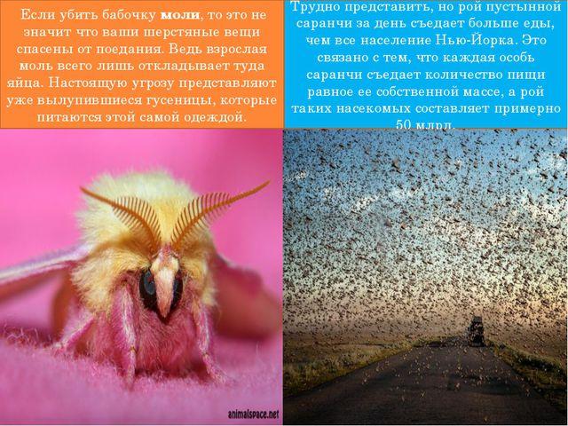 Если убить бабочкумоли, то это не значит что ваши шерстяные вещи спасены о...