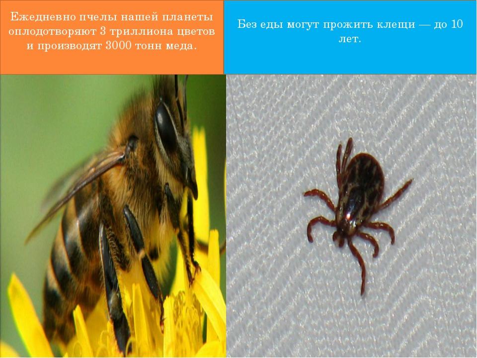 Ежедневно пчелы нашей планеты оплодотворяют 3 триллиона цветов и производят...
