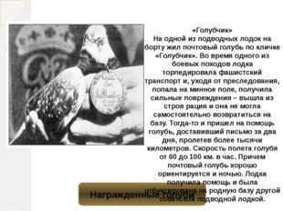 Награжденные голуби «Голубчик» На одной из подводных лодок на борту жил почто