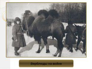 Верблюды на войне