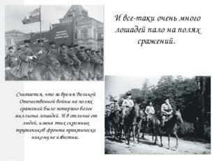 И все-таки очень много лошадей пало на полях сражений. Считается, что за врем