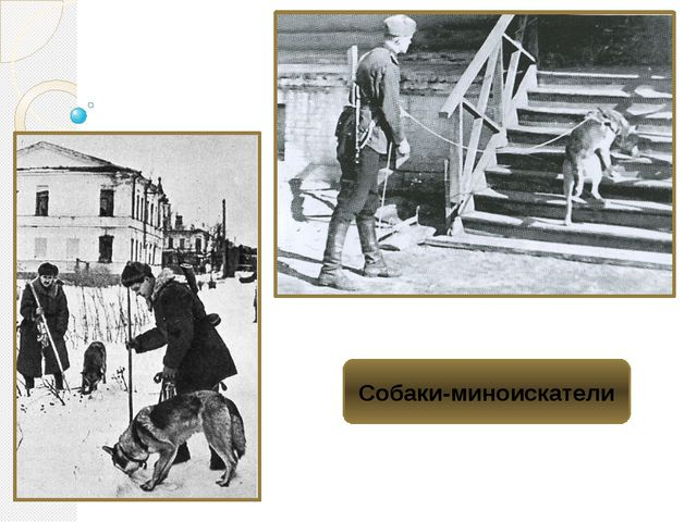 Собаки-миноискатели
