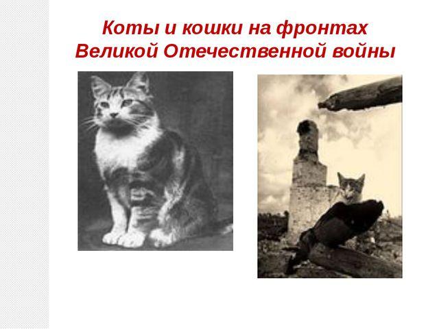 Коты и кошки на фронтах Великой Отечественной войны