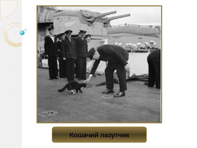Кошачий лазутчик