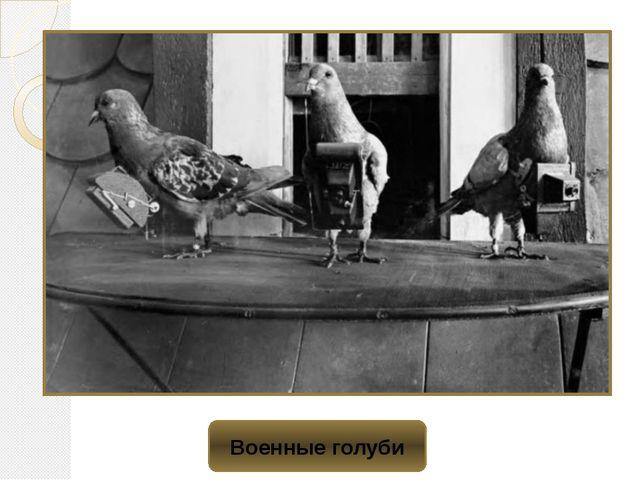 Военные голуби