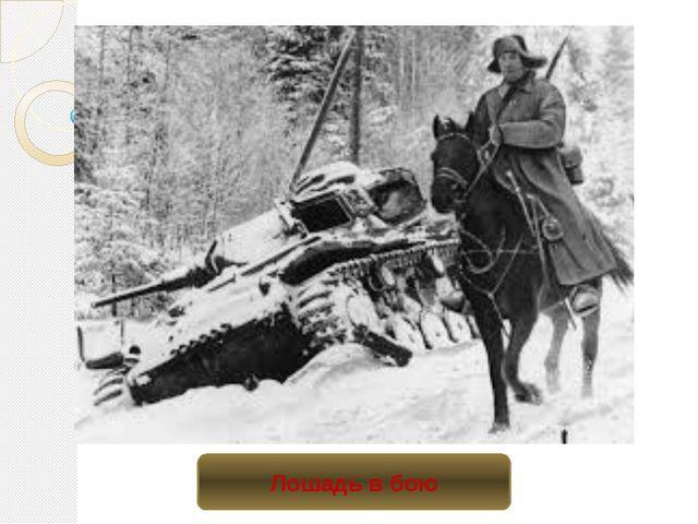 Лошадь в бою