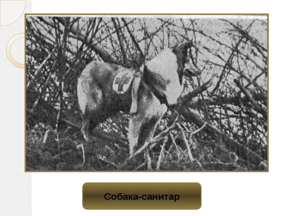 Собака-санитар
