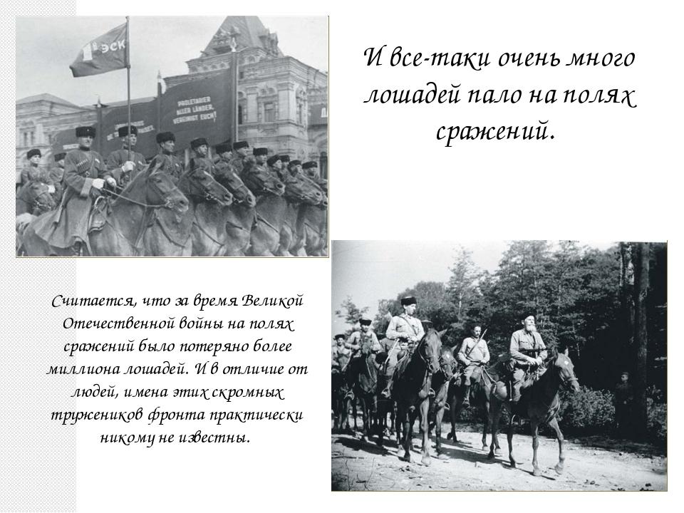 И все-таки очень много лошадей пало на полях сражений. Считается, что за врем...