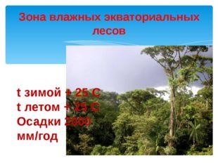Зона влажных экваториальных лесов t зимой + 25 С t летом + 25 С Осадки 2000