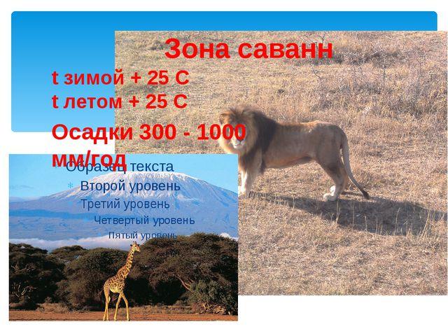 Зона саванн t зимой + 25 С t летом + 25 С Осадки 300 - 1000 мм/год