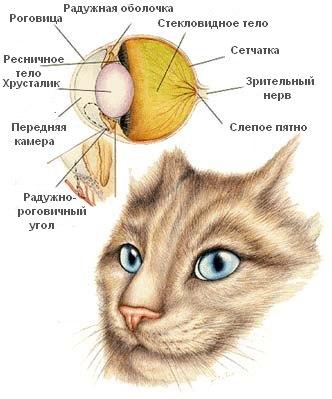 http://www.vetmd.ru/img/work/catalog/a_5174_4902.jpg