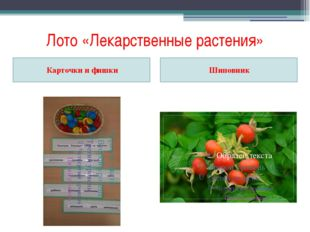 Лото «Лекарственные растения» Карточки и фишки Шиповник