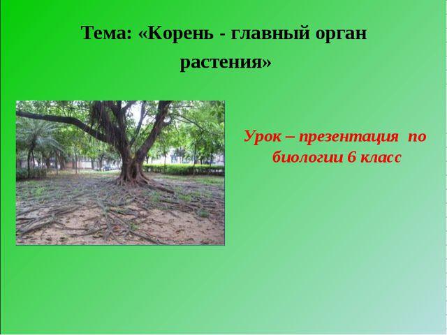 Тема: «Корень - главный орган растения» Урок – презентация по биологии 6 класс