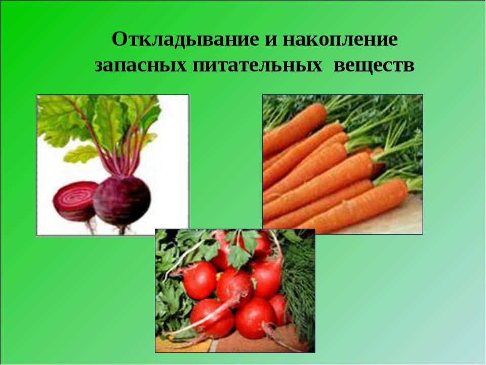 Откладывание и накопление запасных питательных веществ