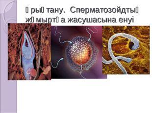 Ұрықтану. Сперматозойдтың жұмыртқа жасушасына енуі