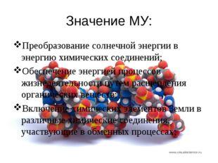 Значение МУ: Преобразование солнечной энергии в энергию химических соединений