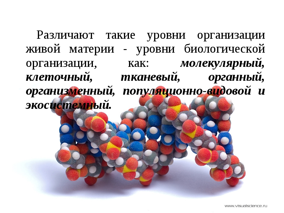 Различают такие уровни организации живой материи - уровни биологической орган...