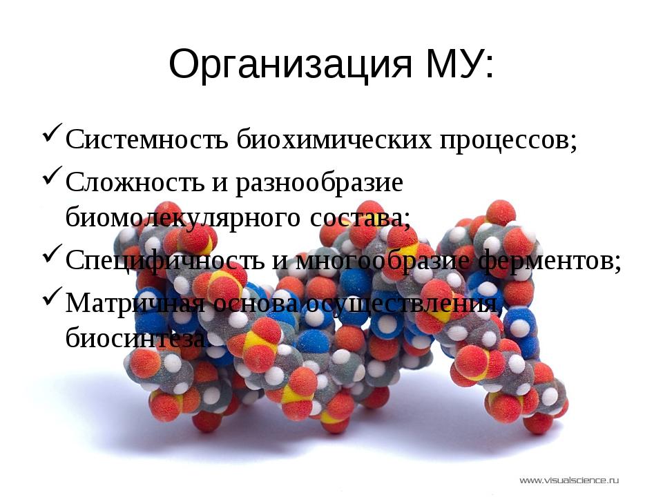 Организация МУ: Системность биохимических процессов; Сложность и разнообразие...