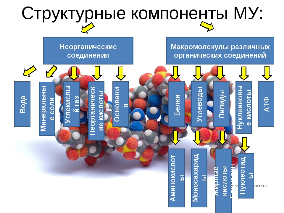 Структурные компоненты МУ: Макромолекулы различных органических соединений Не...