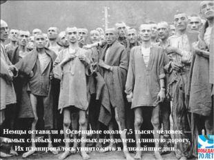 Немцы оставили в Освенциме около 7,5 тысяч человек — самых слабых, не способн