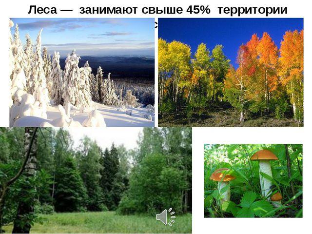 Леса — занимают свыше 45% территории России