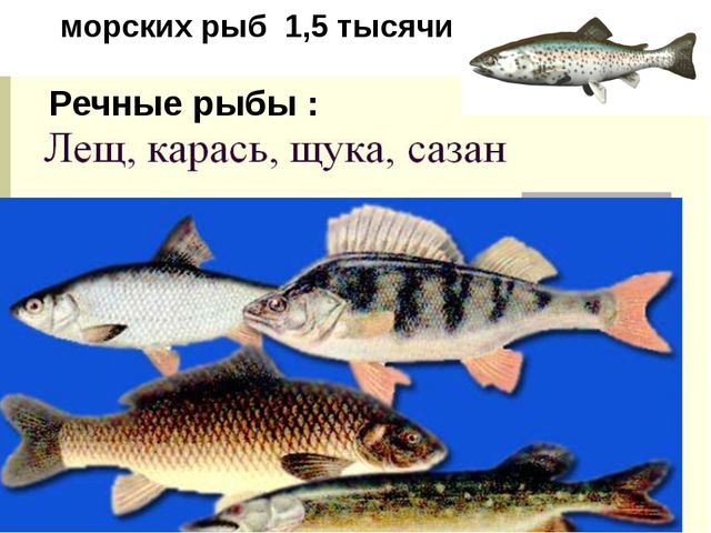 морских рыб 1,5 тысячи Речные рыбы :