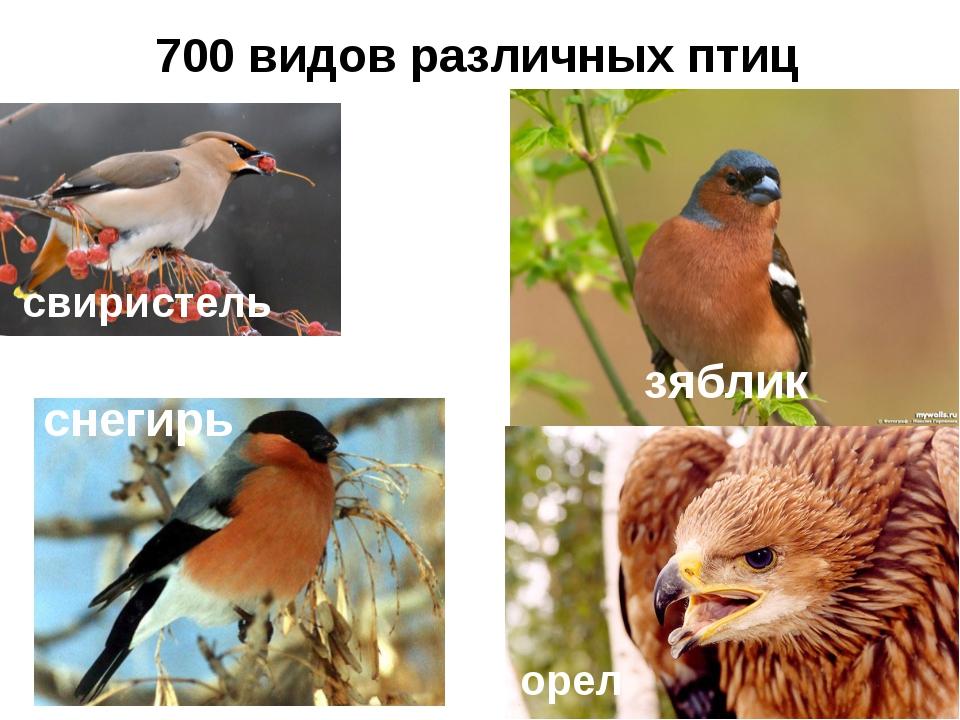 700 видов различных птиц свиристель зяблик орел снегирь
