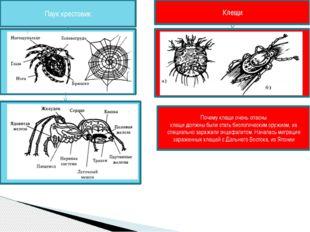 Почему клещи очень опасны клещи должны были стать биологическим оружием, их с