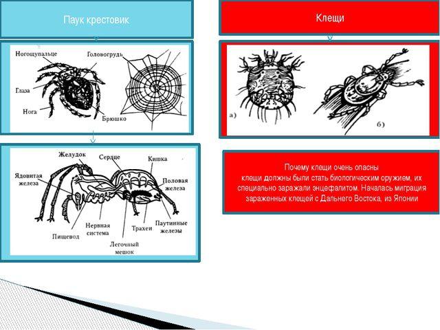 Почему клещи очень опасны клещи должны были стать биологическим оружием, их с...