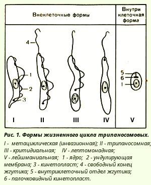 Трипаносомовые