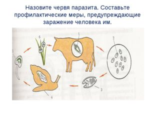 Назовите червя паразита. Составьте профилактические меры, предупреждающие зар