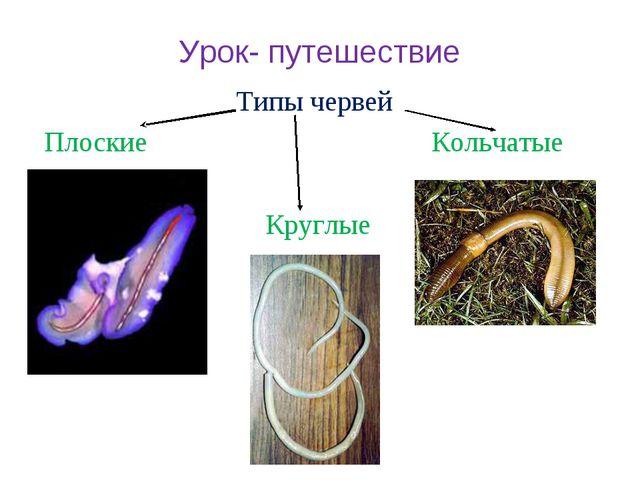 Урок- путешествие Типы червей Плоские Кольчатые Круглые