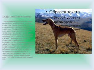 ТАЗЫ (казахская борзая) Изображения собак данной породы встречаются в петрог