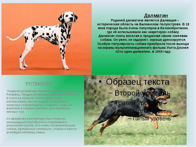 Далматин Родиной далматина является Далмация – историческая область на Балка...