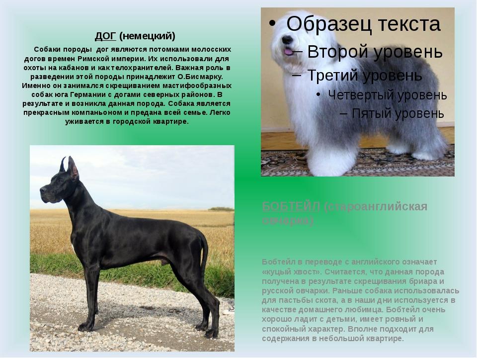 ДОГ (немецкий) Собаки породы дог являются потомками молосских догов времен Р...