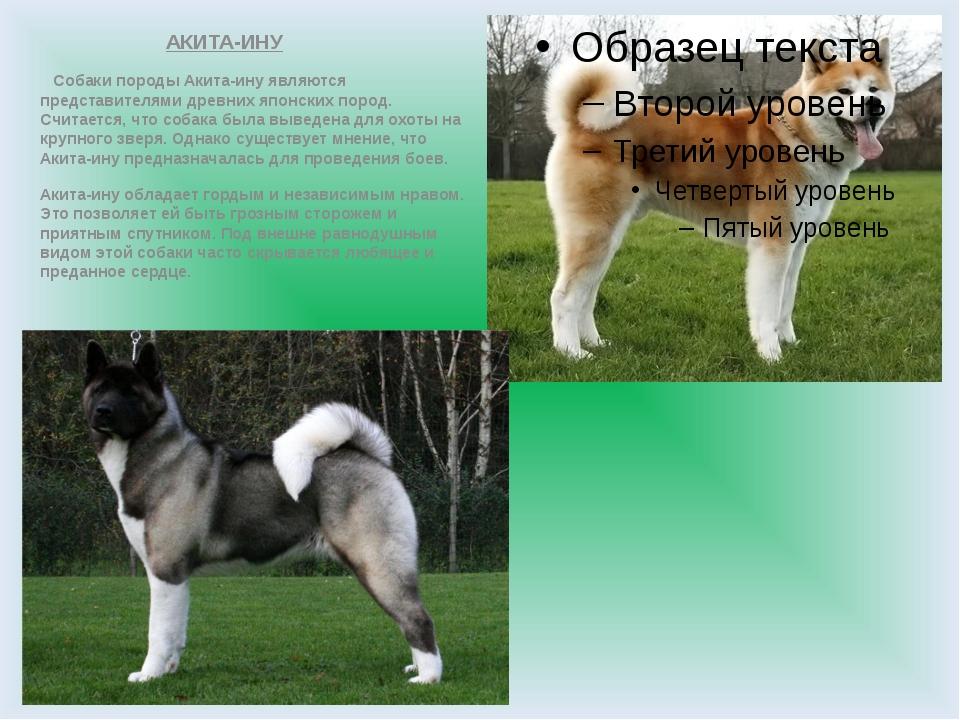 АКИТА-ИНУ Собаки породы Акита-ину являются представителями древних японских...
