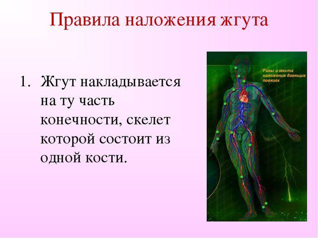 Правила наложения жгута Жгут накладывается на ту часть конечности, скелет кот...