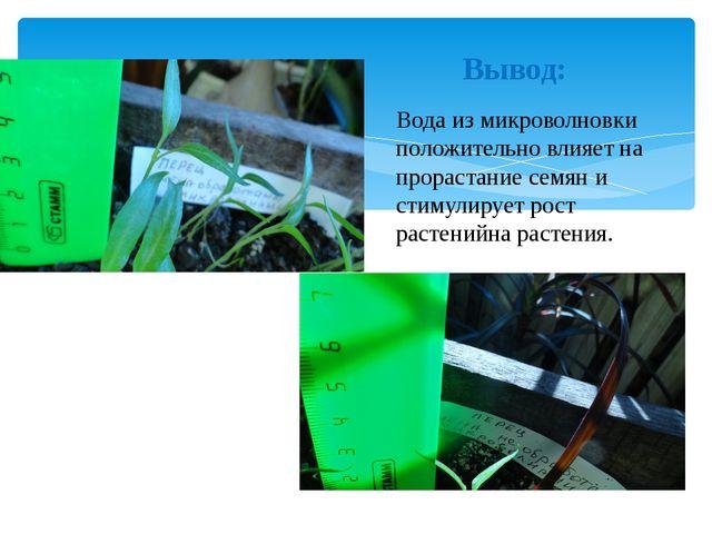 Вывод: Вода из микроволновки положительно влияет на прорастание семян и стиму...