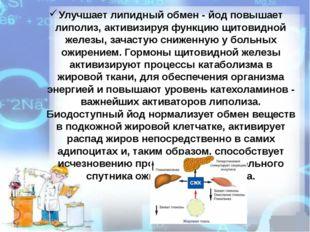 Улучшает липидный обмен - йод повышает липолиз, активизируя функцию щитовидно