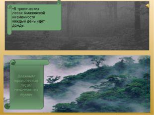 В тропических лесах Амазонской низменности каждый день идёт дождь.